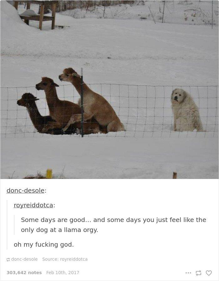 single people jokes dog at lama orgy