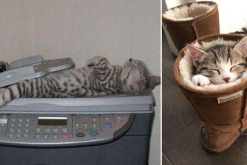 awkward cats sleeping