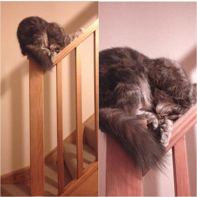 awkward cats sleeping bannister