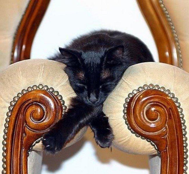 awkward cats sleeping between chairs