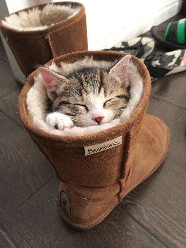 awkward cats sleeping boot