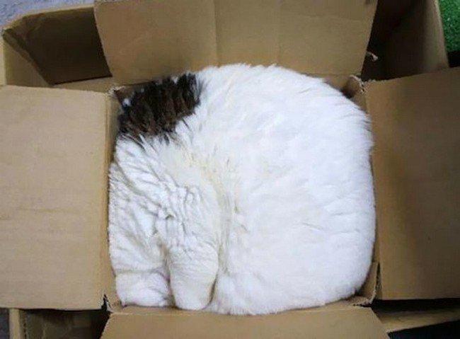 awkward cats sleeping box