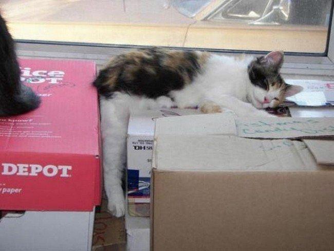 awkward cats sleeping boxes