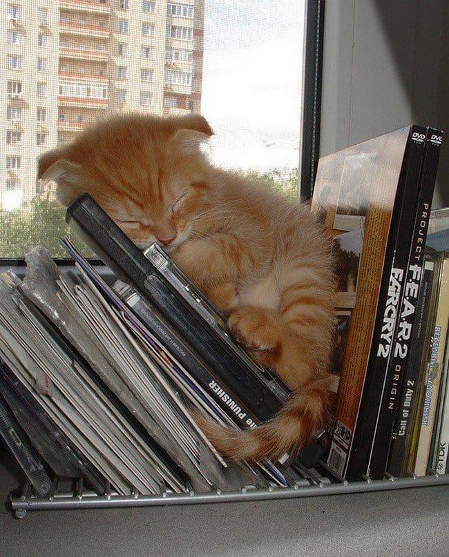 awkward cats sleeping cds