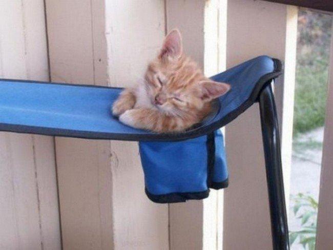 awkward cats sleeping chair pocket