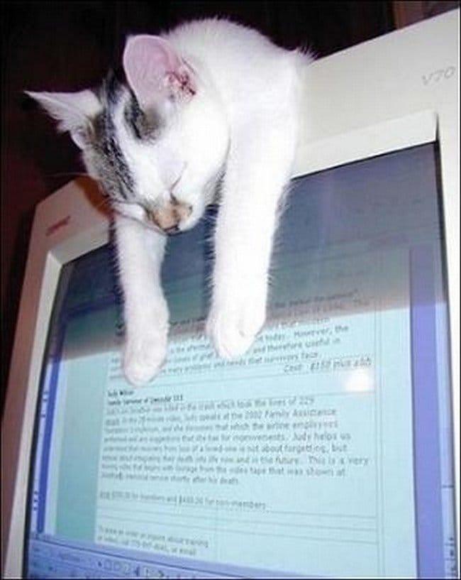 awkward cats sleeping computer screen