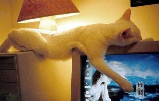 awkward cats sleeping furniture computer
