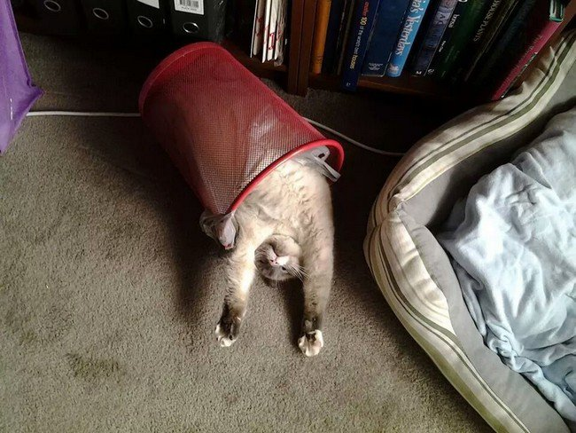 awkward cats sleeping grabage pail