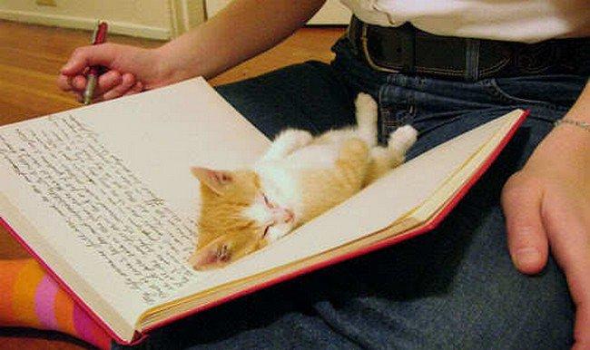 awkward cats sleeping journal