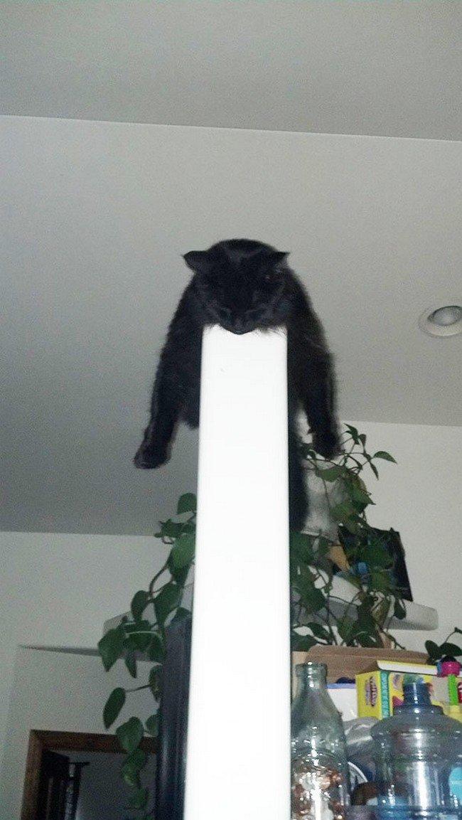 awkward cats sleeping post