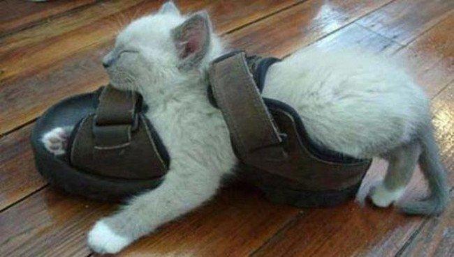 awkward cats sleeping sandal