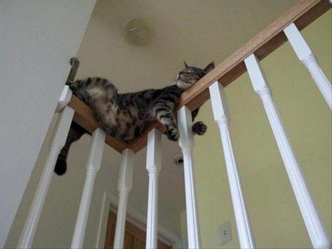awkward cats sleeping stair rail