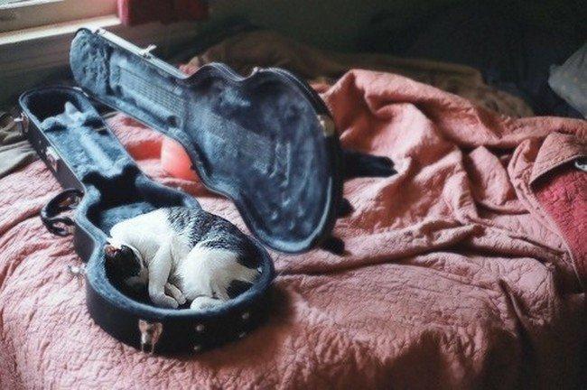 awkward cats sleeping violin case