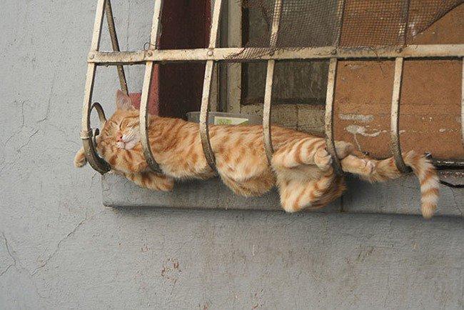 awkward cats sleeping window