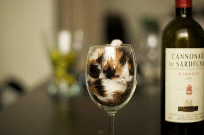 awkward cats sleeping wine glass