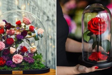 beauty-and-the-beast-style-roses-forever-rose