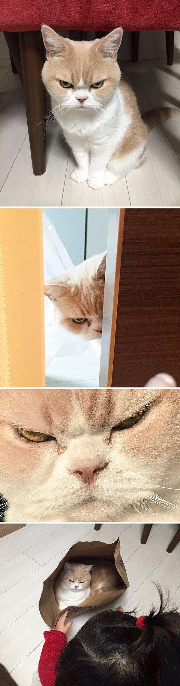 evil cats bad look