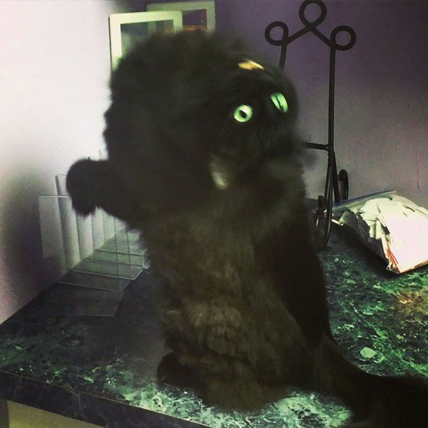 evil cats bending