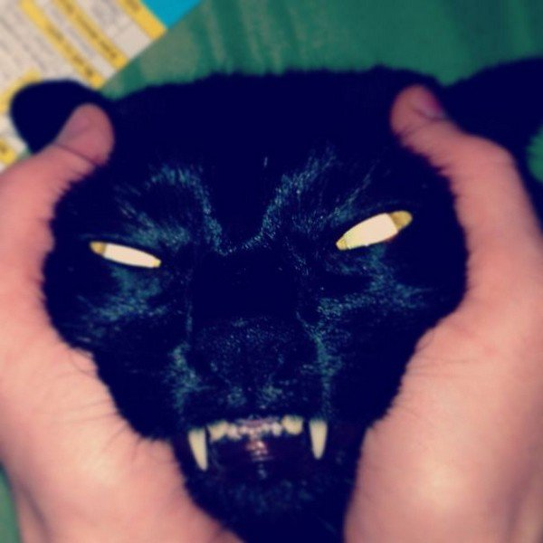 evil cats black scary face