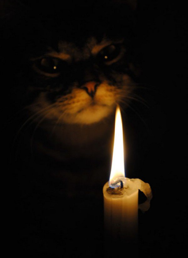 evil cats candle