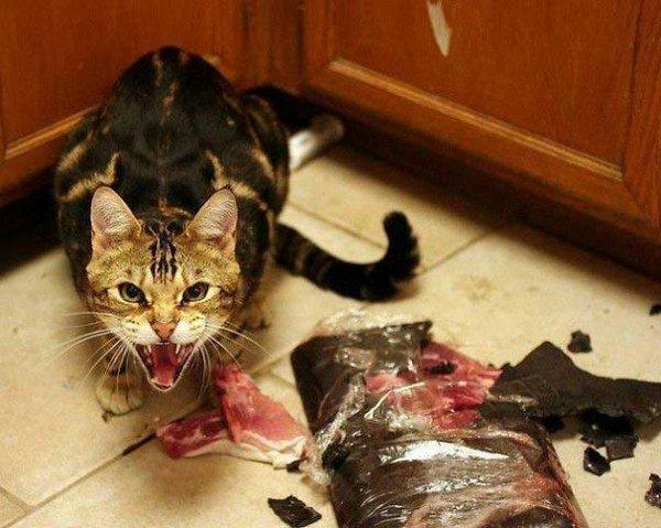 evil cats destroying food