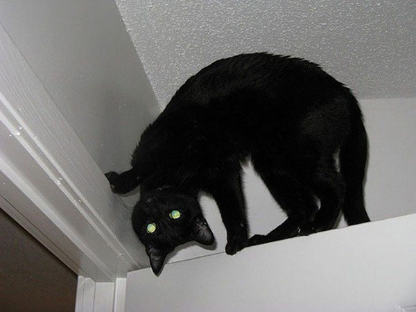evil cats door angle
