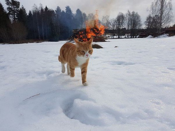 evil cats fire snow
