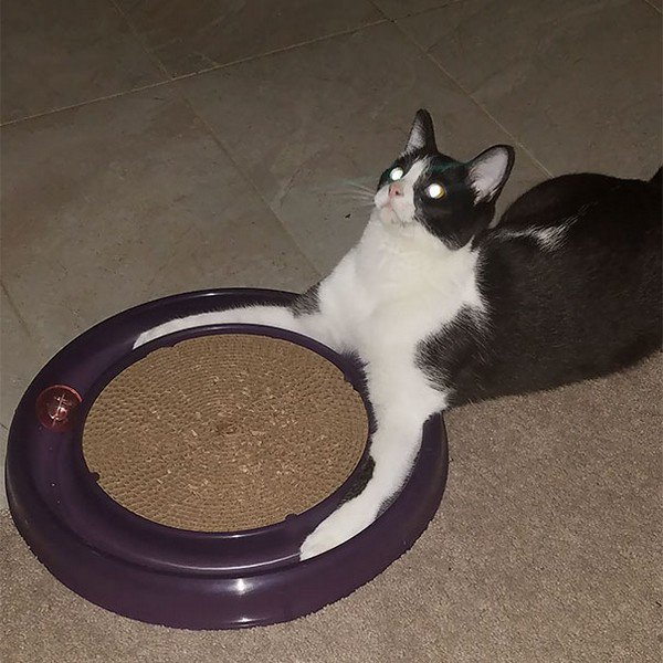 evil cats floor