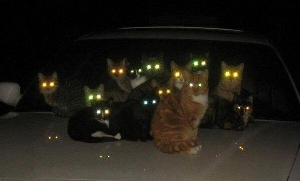evil cats glowing eyes car