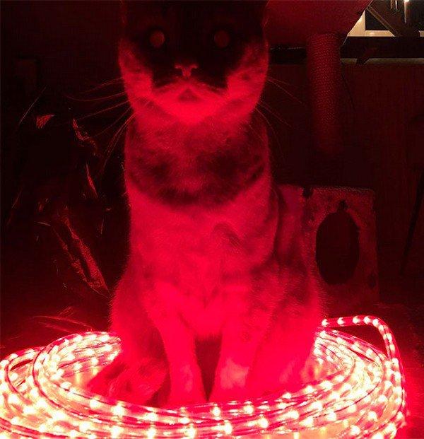 evil cats lit up