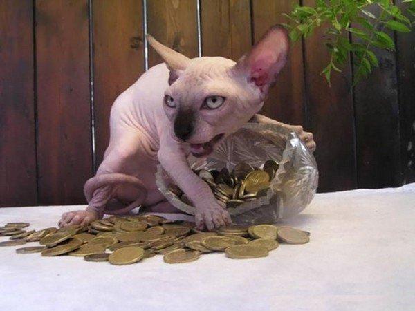 evil cats money