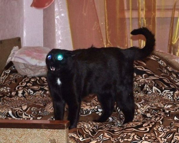 evil cats neckless glowing eyes
