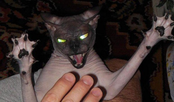 evil cats scary pose