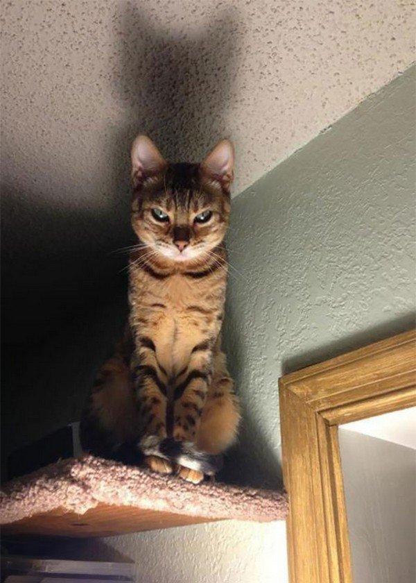 evil cats stare
