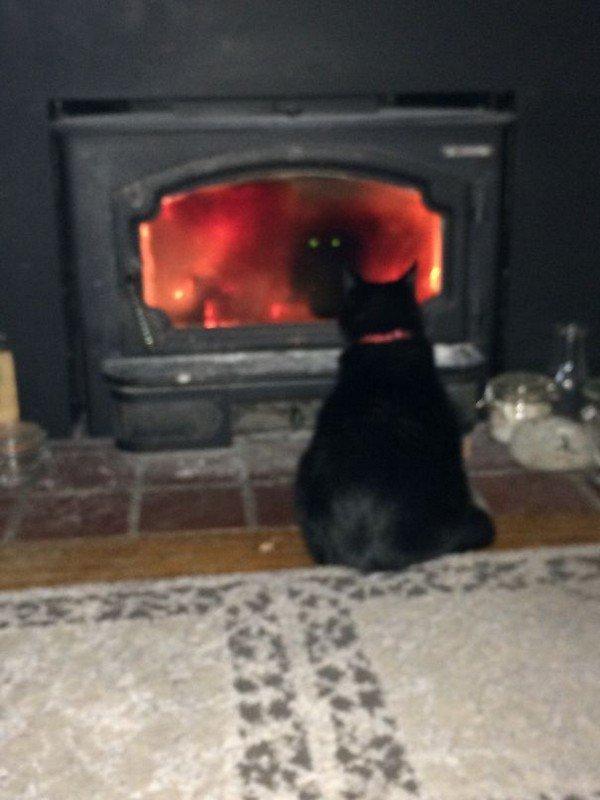 evil cats staring burner