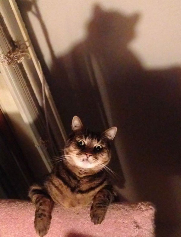 evil cats staring