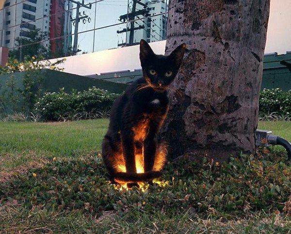 evil cats tree light