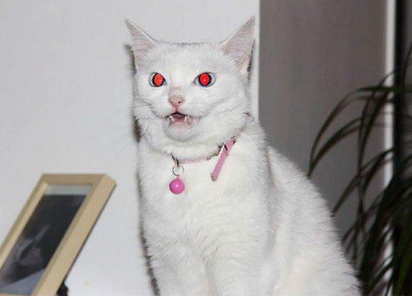 evil cats white collar