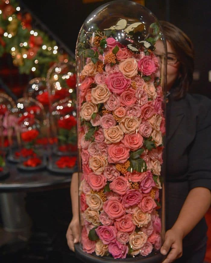 forever rose huge rose collection