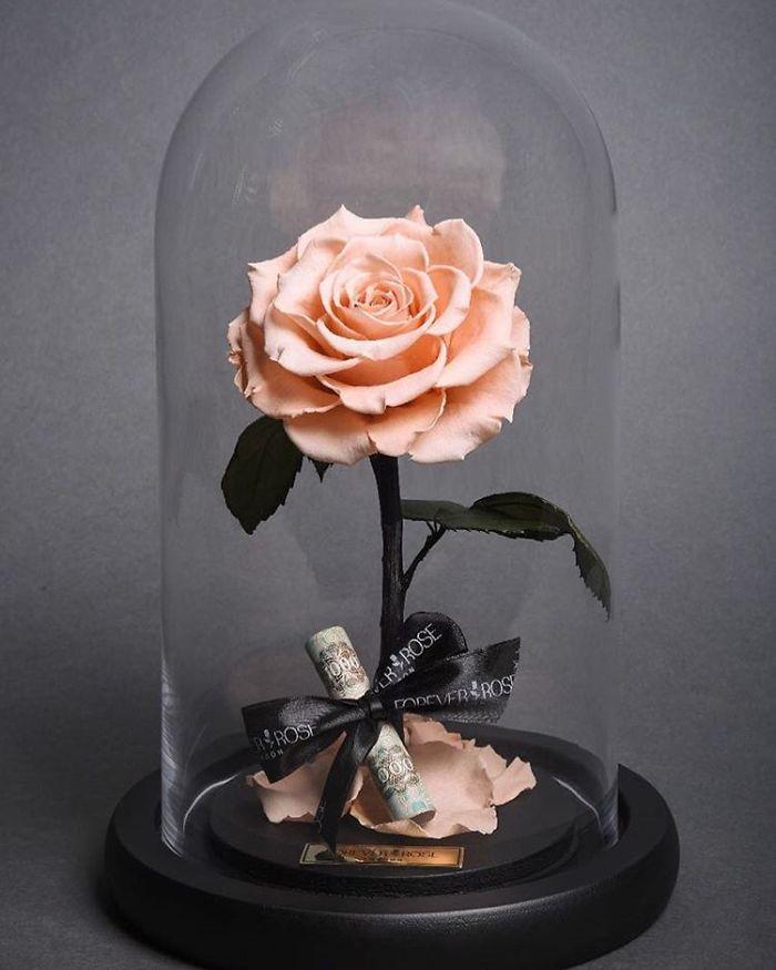 forever rose pink rose 1000 bill