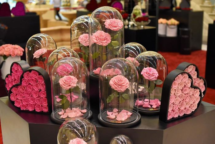 forever rose pink roses