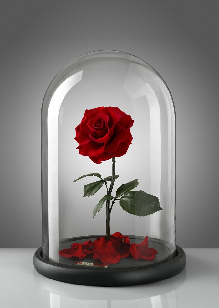 forever rose single red rose