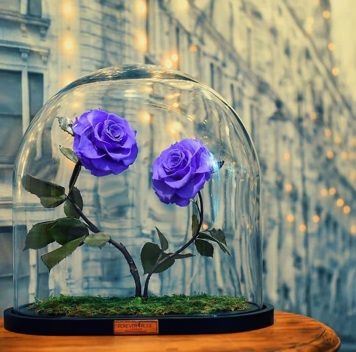 forever rose two blue roses