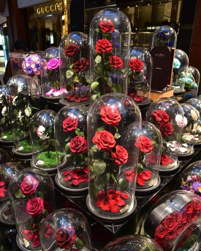 forever rose variety