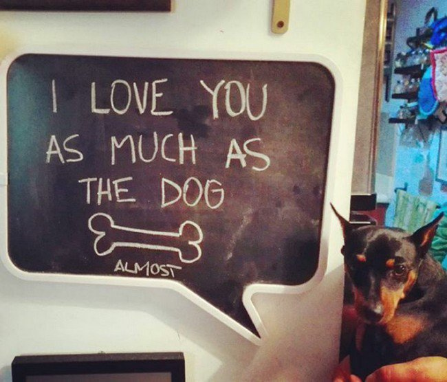 funny love notes dog