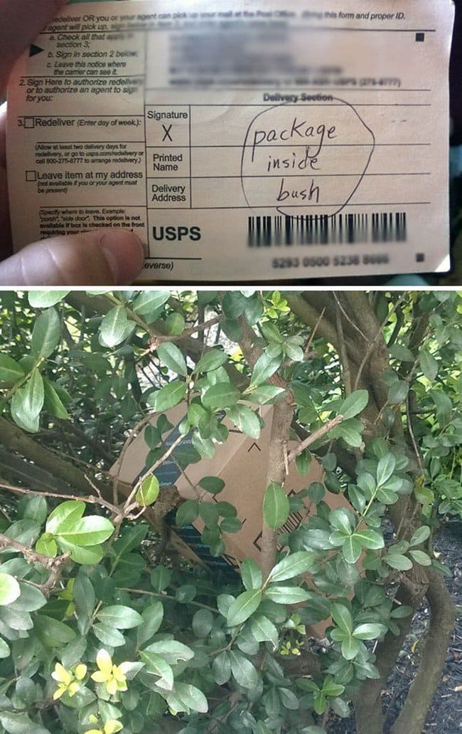 package inside bush