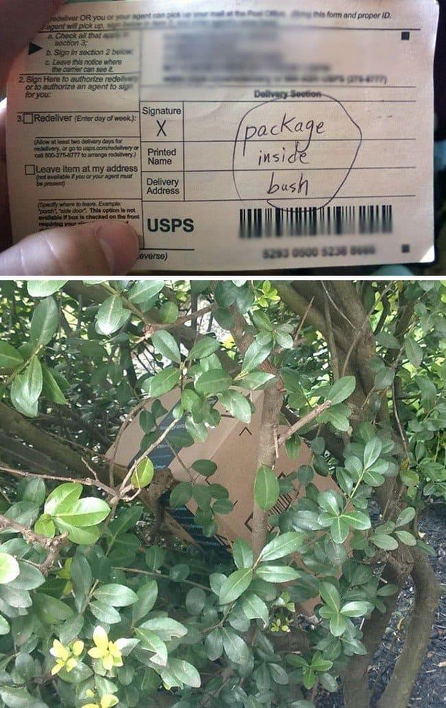 package inside bush