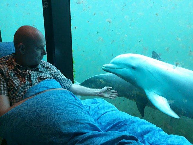 sick man dolphin
