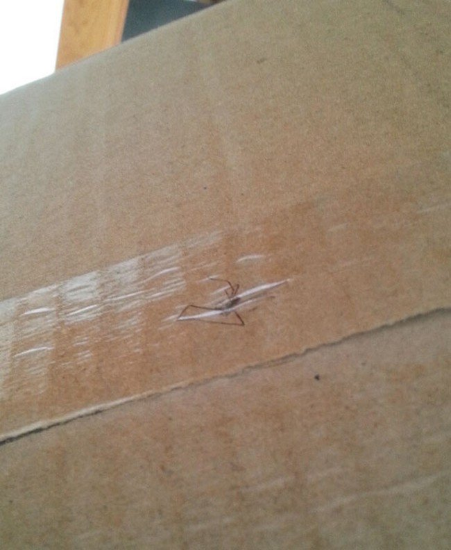 spider taped package