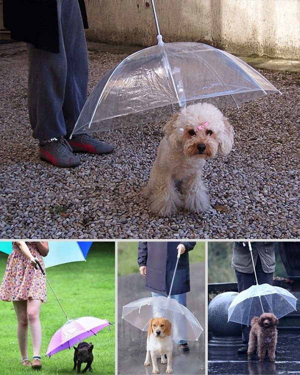 unique inventions umbrella for dogs
